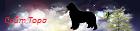 Сайт Жребия Удачи от Тори